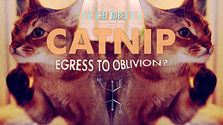 Catnip: Egress to Oblivion?