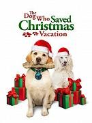 Pes, ktorý zachránil vianočné prázdniny