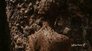 Ayurveda: Art of Being (HD)