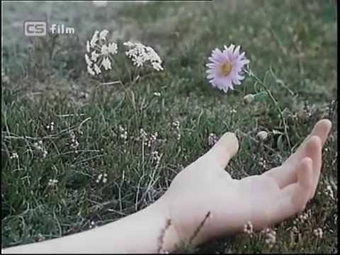 Modré z nebe - magic flowers - music by Štěpán Lucký